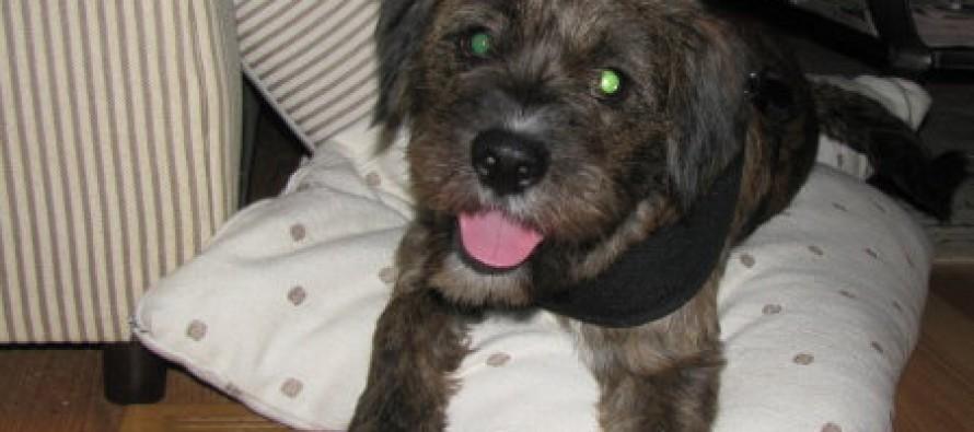 Meet My New Dog: Jackson