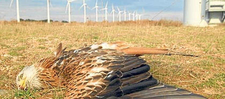 Obama Commits More Taxpayer Money to Killing Birds By Windmill