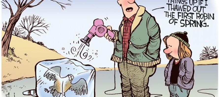 First Robin (Cartoon)