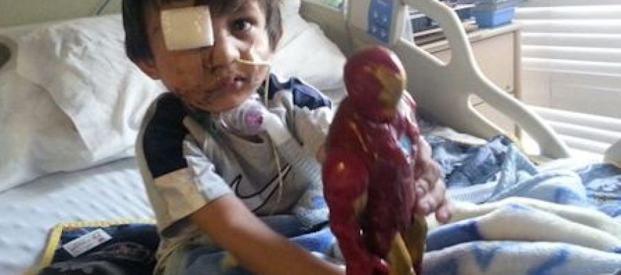 WACKOS: 44,000 Sign Petition To Save Pit Bull That Mauled Child