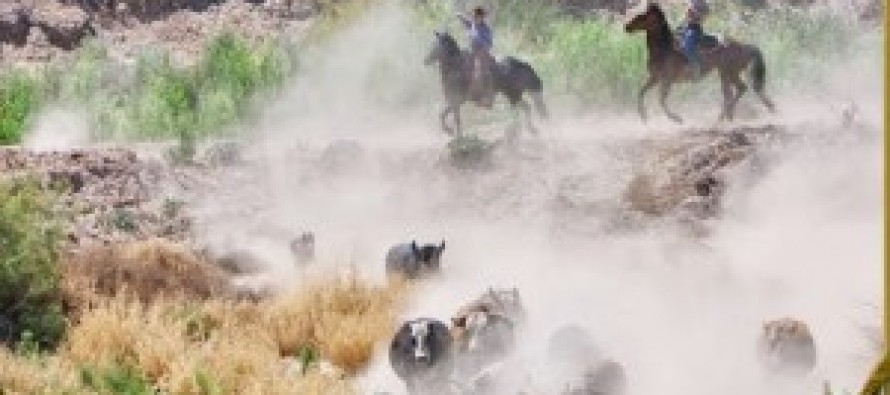 Defiant Nevada rancher faces armed federal agents in escalating confiscation standoff