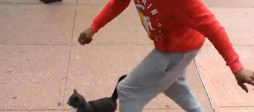 Animal Lovers Track Down Man After Horrific Cat Kicking Video Surfaces on Facebook