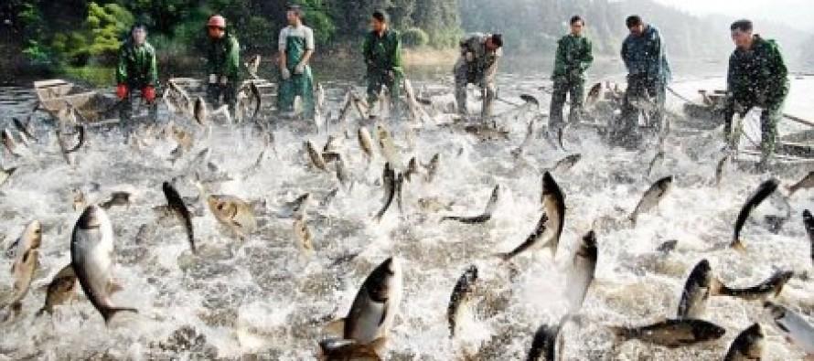 "Minnesota Democrats Change Name of Fish — ""Asian Carp"" Is Offensive & ""Hurtful"""