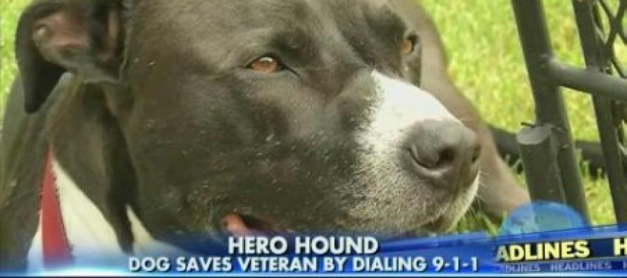 Dog Calls 911 To Save Owner, A U.S. Marine Having Seizure