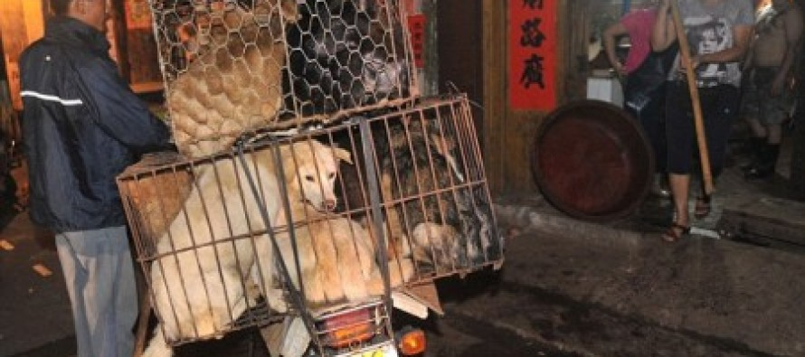 China moves its summer solstice DOG-EATING celebrations forward to avoid protests by animal rights activists