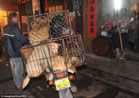 Dog in cages in china for meat