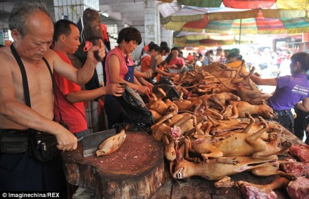 dog on chopping block china