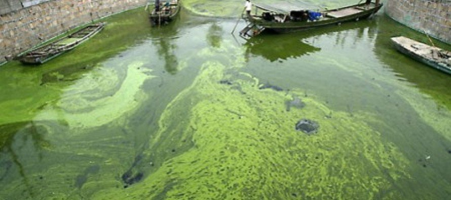 Obama Defense Dept. Spends $150 a Gallon for Algal Jet Fuel Rather Than $2.88 a Gallon for Conventional Fuel