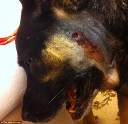 dog shot