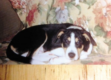 Dog killed with razor blades