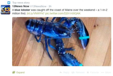 blue-lobster
