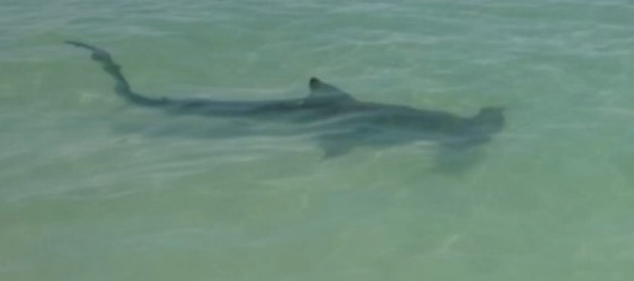 WATCH two unsuspecting tourists circled by a shark in Florida unable to hear warning cries