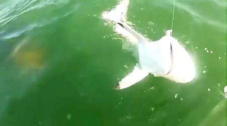 shark-grouper-638
