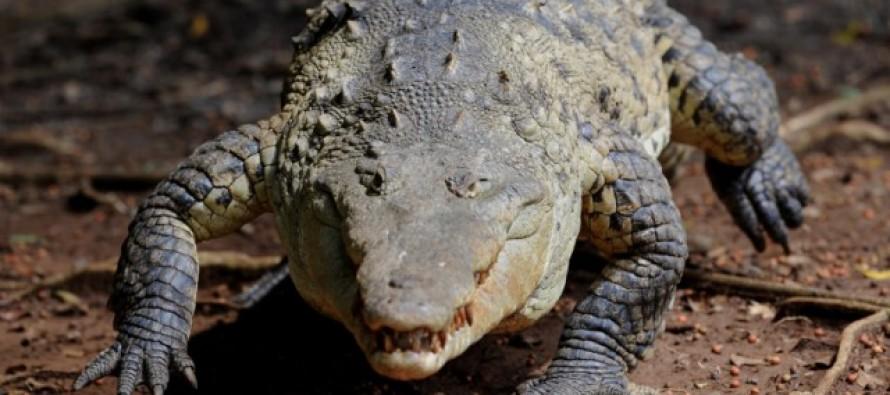 HORRIFIC: Woman commits suicide by a thousand crocodiles