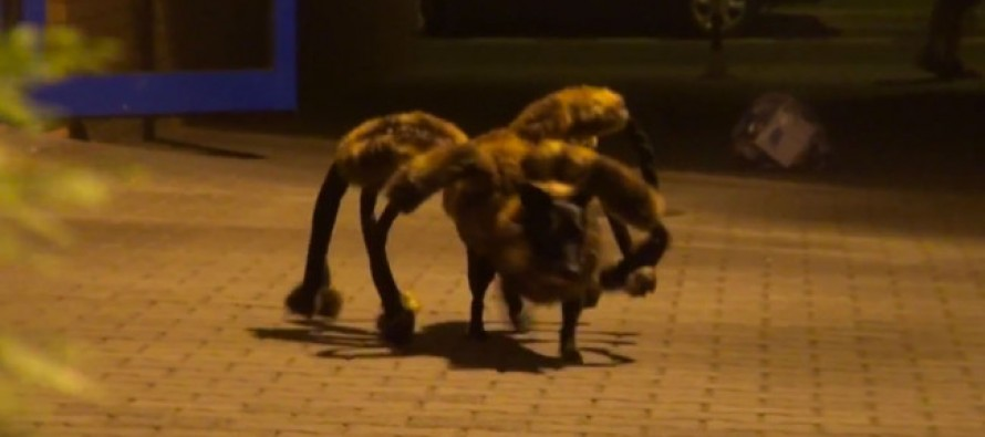 THESE JOKERS PUT A GIANT SPIDER OUTFIT ON A DOG AND SCARED THE LIFE OUT OF PEOPLE-GREATEST PRANK EVER?