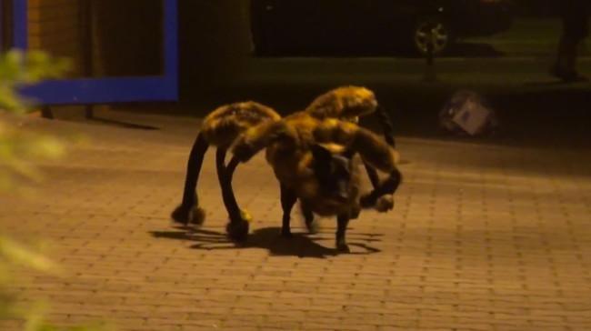 Spider-Dog, Spider-Dog, Does whatever Spider Dog Does!