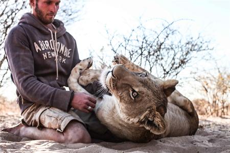 gruener-lion