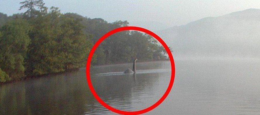 Could this clear shot of a LOCH NESS MONSTER style beastie be real or is it just another hoax?