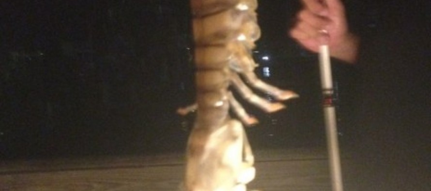 Incredible Pics: 'Massive' Sea Creature Pulled Out of the Water By Man on Florida Fishing Dock