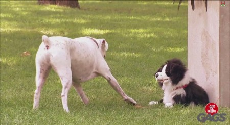 pranking dogs