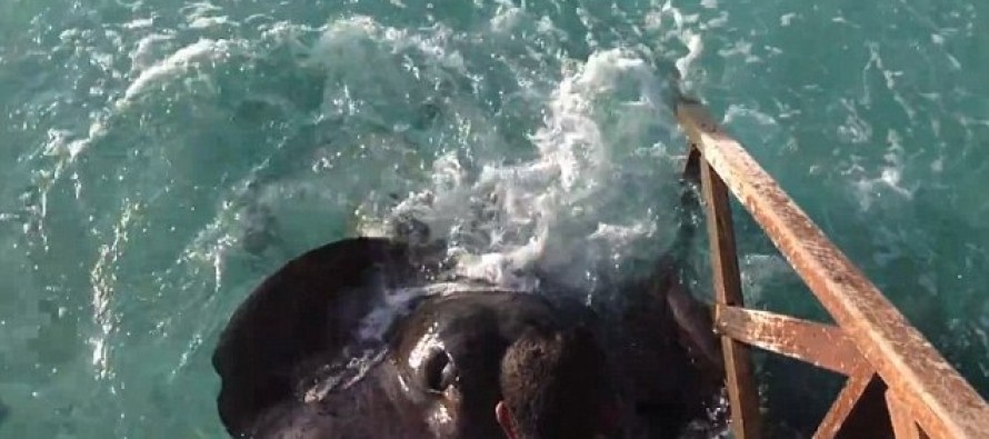 [ADORABLE VIDEO] This 700 LB PLUS Fish Just Wants a NEW FRIEND!