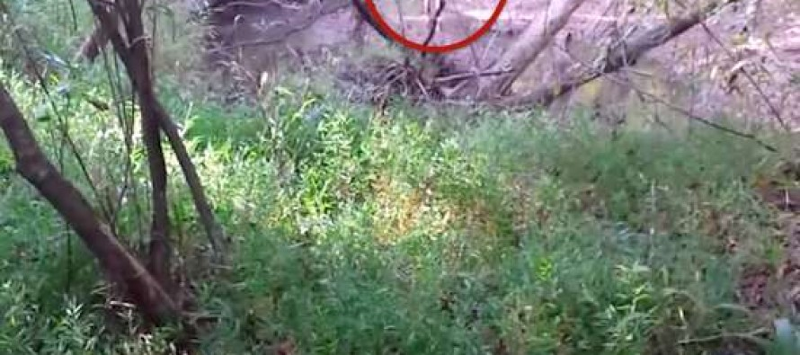 VIDEO: Hunter Stumbled Across Something On the Way to His Stand That Left Him Scared: 'Please Don't Shoot Me!'