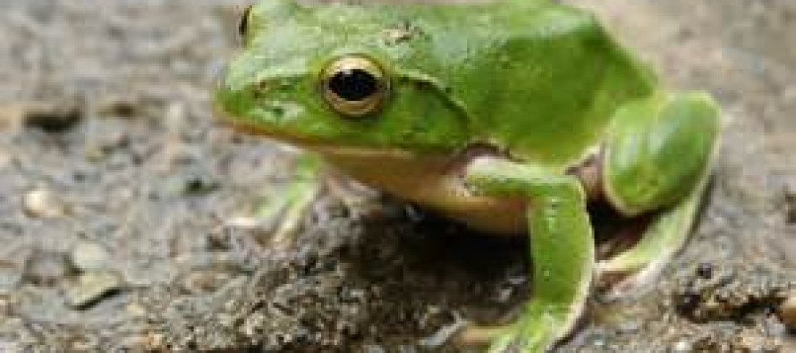 Video: This frog made him pay for taunting it with cell phone app