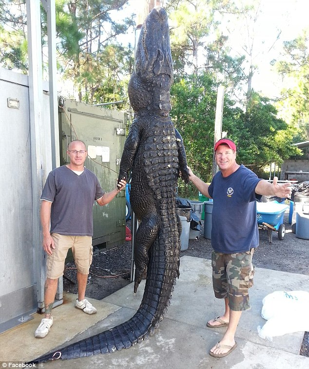 Hunters: The pair successfully lured the 13ft-long creature, nicknamed 'Lumpy', with bait at St Johns River in the early hours of last Sunday. They then caught it using just 'a rope, a few hooks and their strength'