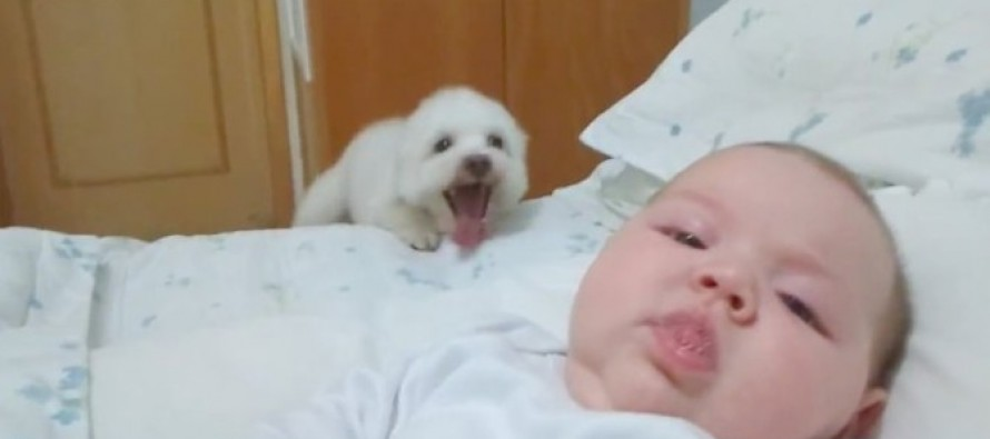 WARNING: Cuteness factor is EXTREME! VIDEO will make You LAUGH as this overly Excited Puppy tried to see the baby