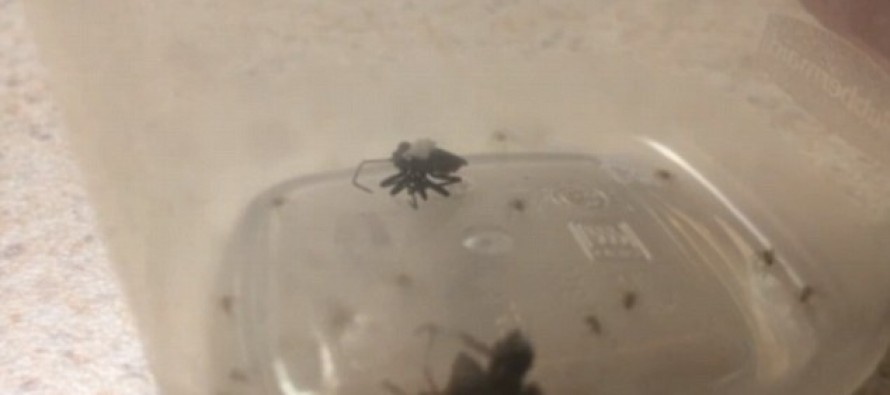 VIDEO: Watch This Mommy Spider Explode With Baby Spiders During Violent Showdown