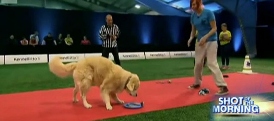 WATCH: Dog Hilariously Fails in Obedience Competition