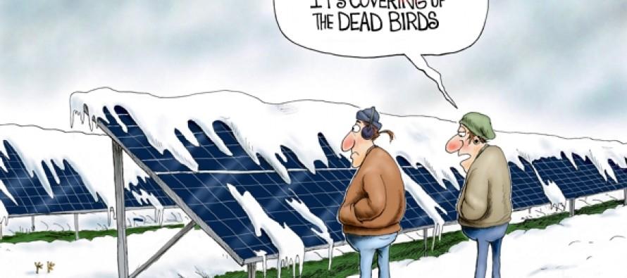 Fowl Weather (Cartoon)