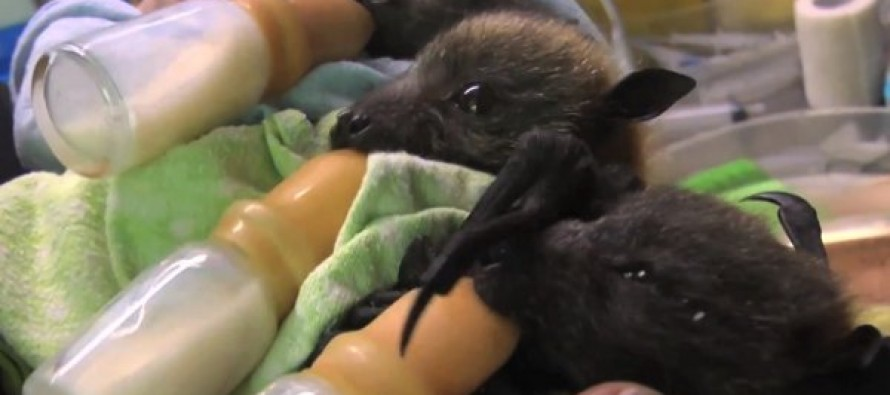 Those are really cute…..wait, those are BABY BATS!