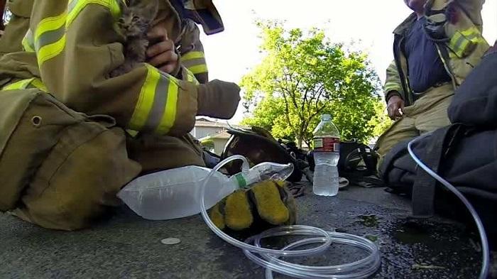 firefighter kitten