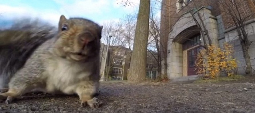 Squirrel Steals a GoPro Camera, Runs Up a Tree, and Becomes an Internet Celebrity