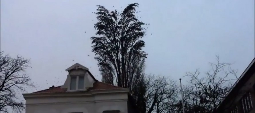 VIDEO: A Tree Isn't All It Appears To Be When Birds Perched in Its Branches Fly Away