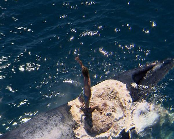 whale with sharks