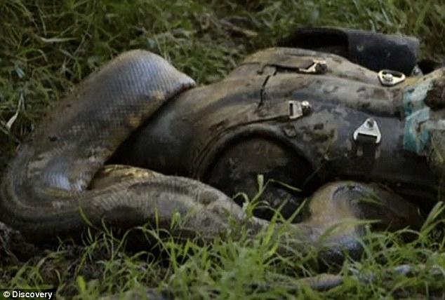 Man eaten by snake