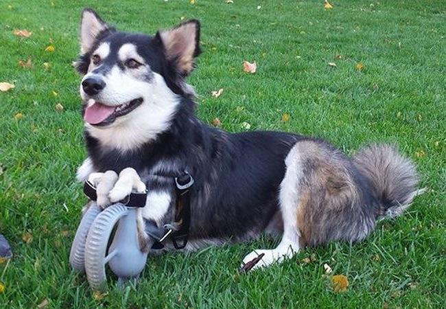 bionicdog-derby-3d-printed-legs