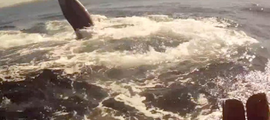 VIDEO: Kayaker Encounters a Massive Redondo Beach Blue Whale Swimming Alongside Him