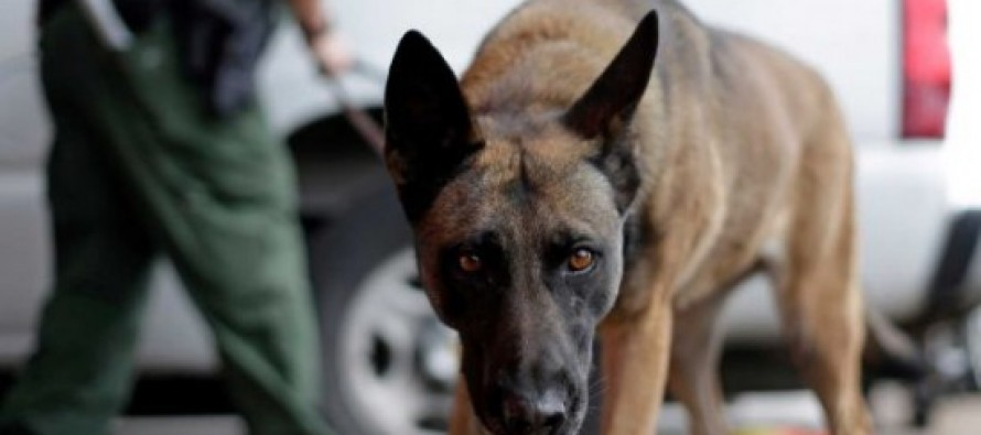 Illegal Immigrant Drug Smuggler Sues After He's Bitten By Border Patrol Dog