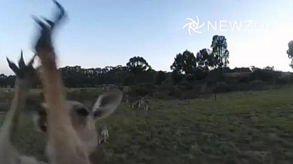 kangaroo_drone