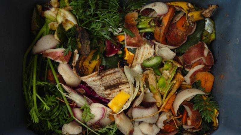Compost_szczel22