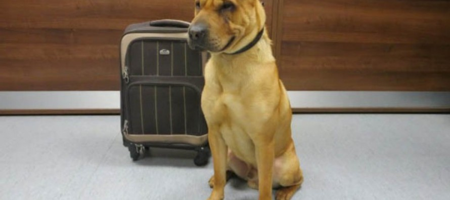 Pup Found Abandoned with Suitcase in Scotland
