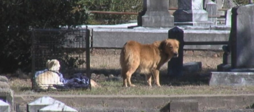 HEARTBREAKING: Mother Dog Refuses to Leave Dead Puppy's Side [Watch]