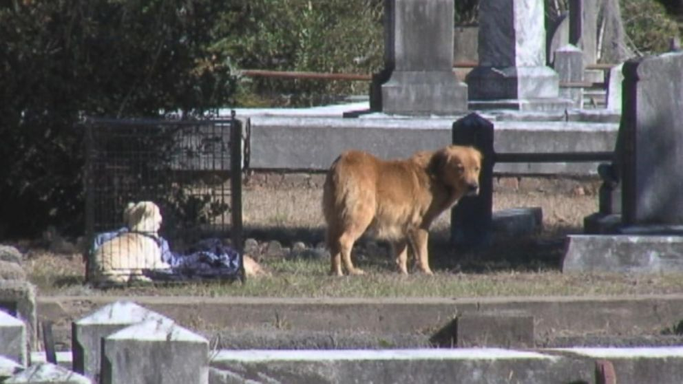 abc_wjcl_dog_cemetary_kb_150109_16x9_992