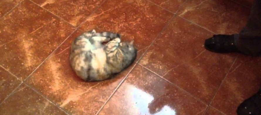 This Hilariously Stupid Cat Smells Olives, Freaks Out, and Goes BACK for More!