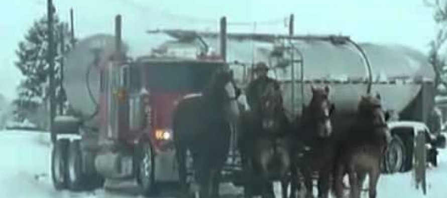 "AMAZING VIDEO: When These Clydesdales Rescue A Semi, ""Horsepower"" Takes On A New Meaning"