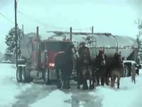 clydesdale semi