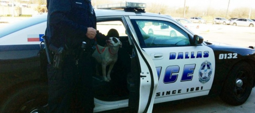 Police Officer Rescues Terrified Dog, Then Both Fall for Each Other on Way to Animal Shelter